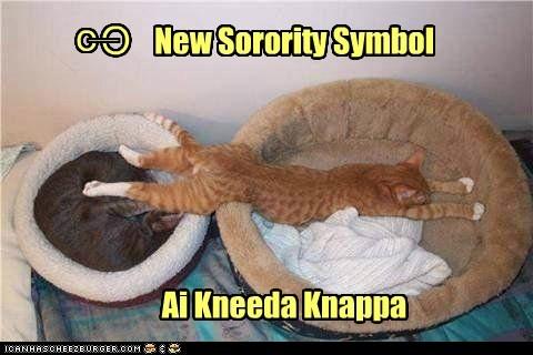bed,frat,fraternity,greek,greek system,nap,sorority