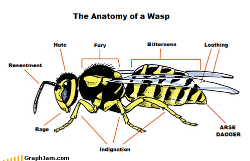 anatomy,best of week,bitter,bug,evil,hate,sting,wasp