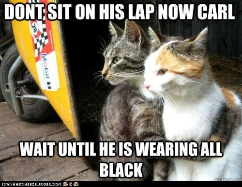 annoying,black,Cats,clothing,fur,Memes,restraining cat