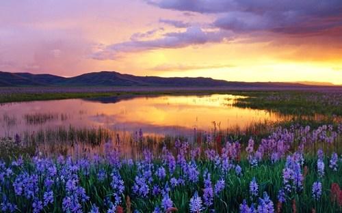 flowers,Idaho,lake,prairie,sunset