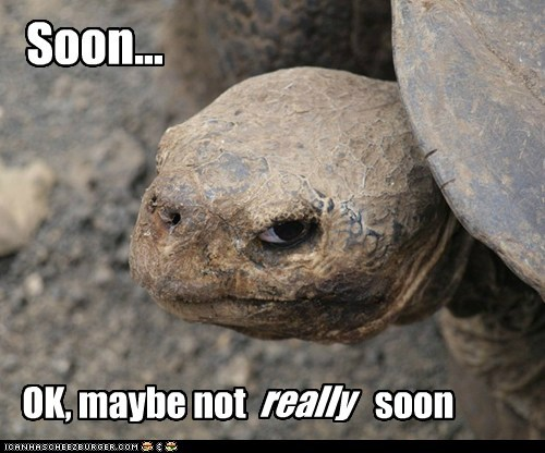 Insanity Tortoise: Still, You'd Better Start Running at Some Point