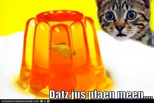 fish,goldfish,Jello,jelly,mean,oh no,stuck,trapped