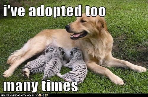 i've adopted too  many times