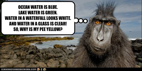 OCEAN WATER IS BLUE. LAKE WATER IS GREEN. WATER IN A WATERFALL LOOKS WHITE. AND WATER IN A GLASS IS CLEAR! SO, WHY IS MY PEE YELLOW?