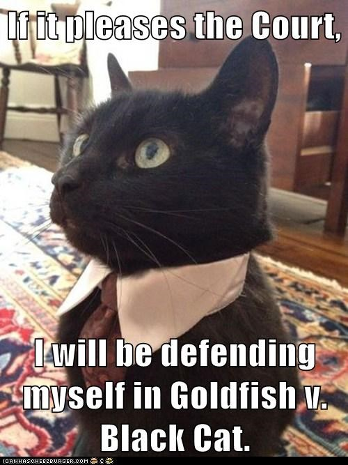 attorney,best of the week,Cats,defense,fish,goldfish,judge,jury,law,lawyer,Lawyers,lolcats,trial