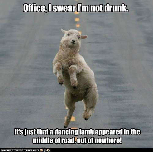 dancing,disbelief,drunk,i swear,implausible,lamb,officer,out of nowhere,sheep