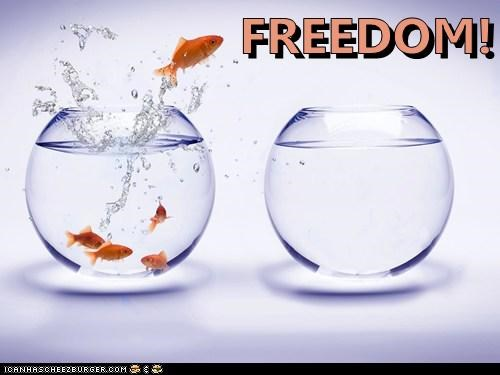 Braveheart,disappointment,Fishbowl,freedom,goldfish