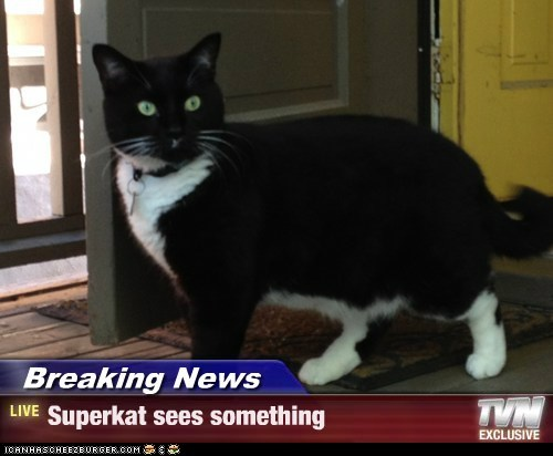 Breaking News - Superkat sees something