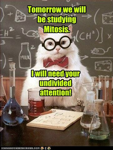 attention,Cats,chemistry cat,Hall of Fame,Memes,mitosis,puns,undivided