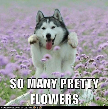 SO MANY PRETTY FLOWERS