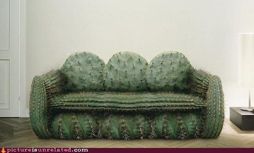 cactus,comfy,couch,pokey,wtf
