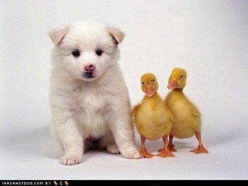 Cyoot Puppy ob teh Day: Goggies & Duckies