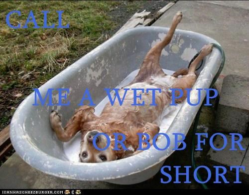 CALL ME A WET PUP   OR BOB FOR SHORT