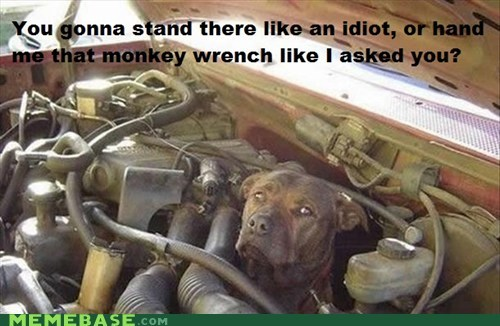 disappoint,dogs,idiot,Memes,money wrench