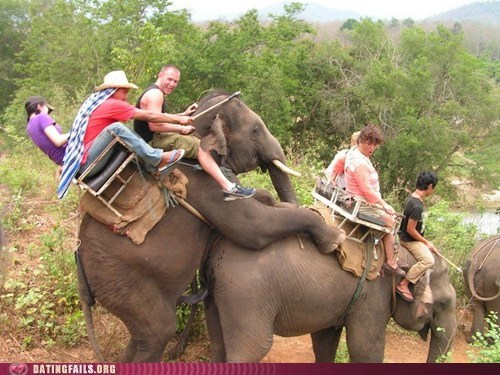 animal sex,elephant sexytime,elephants