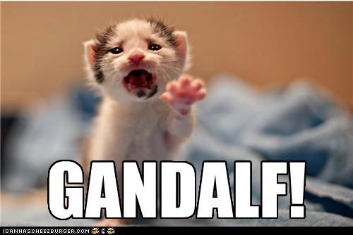 Cats,die,dramatic,fall,frodo,gandalf,kitten,lolcats,Lord of the Rings,Movie,noooo,reaching,reference,yell