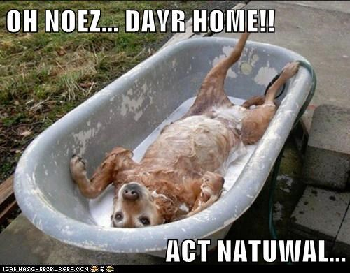 act natural,bathtub,dogs,lab,shampoo,soap