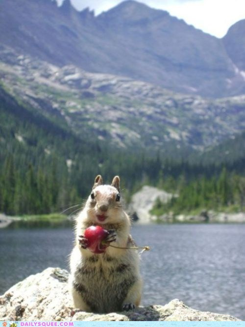 cherry,Hall of Fame,lake,mountain,sharing,squirrel