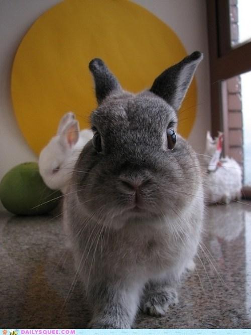 bunny,friend,mean,rabbit,threatening