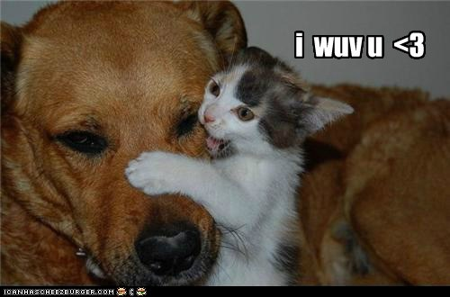Kittehs R Owr Friends: i wuv u