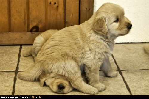 Cyoot Puppy ob teh Day: I got your back