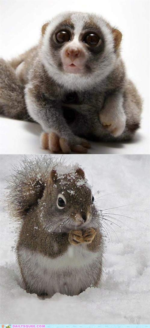 Squee Spree: Loris vs. Squirrel