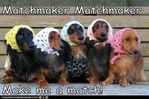 best of the week,Crocheted,dachshund,dogs,fiddler,fiddler on the roof,Hall of Fame,hats,kerchief,Knitted,matchmaker