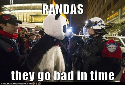 panda,police,political pictures