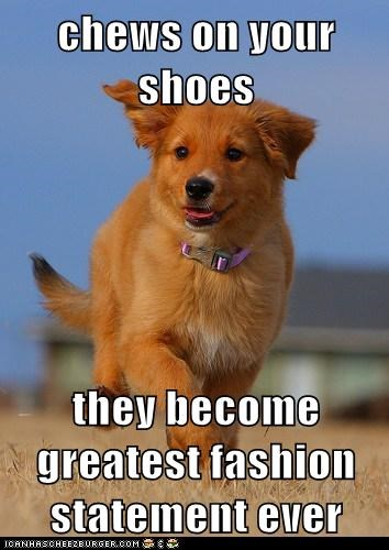 Ridiculously Photogenic Puppy: They're Designer Now