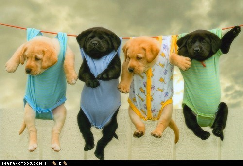 Cyoot Puppy ob teh Day: Hanging Puppies to Dry