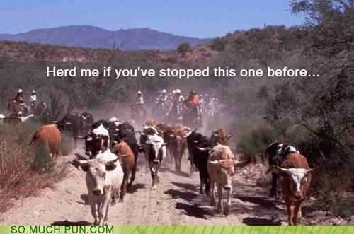 heard,herd,homophone,literalism,lyric,smiths,stop-me-if-youve-heard-t,switch