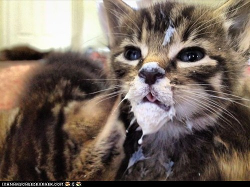 Cyoot Kitteh of teh Day: Do I Have Something on My Face?