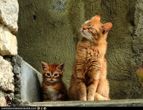 Cats,cyoot kitteh of teh day,expressions,happy,kitten,mama,moms,proud
