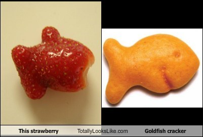 This Strawberry Totally Looks Like Goldfish Cracker