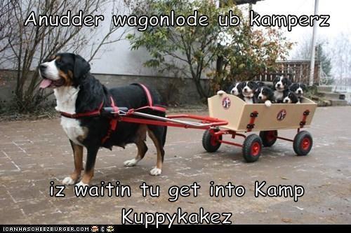 Anudder wagonlode ub kamperz   iz waitin tu get into Kamp Kuppykakez