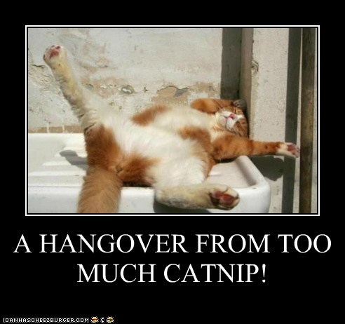 A HANGOVER FROM TOO MUCH CATNIP!