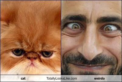 cat Totally Looks Like weirdo