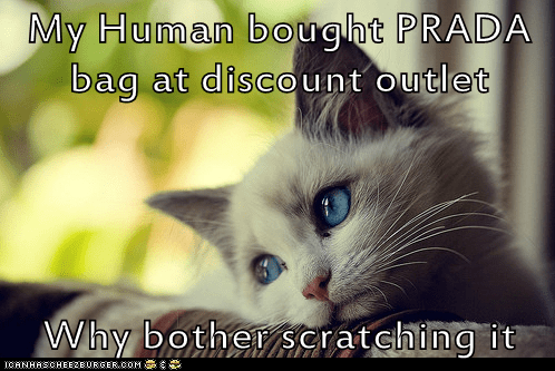 First World Cat Problems: It Even Feels Poor