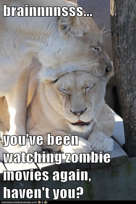 annoyed,best of the week,bite,couple,eating,Hall of Fame,head,lions,movies,netflix,too much,watching,zombie