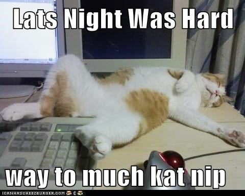 Lats Night Was Hard  way to much kat nip