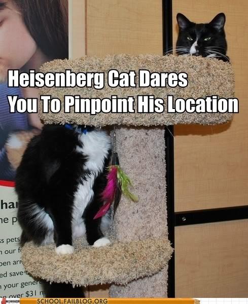 Physics 503: That Darn Cat!