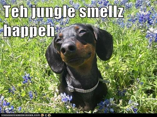 Teh jungle smellz happeh