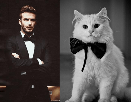 12 Cats That Look Like Male Models