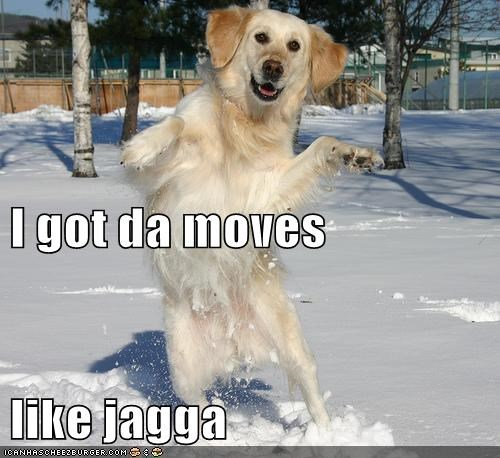 dancing,dogs,lyrics,maroon 5,moves like jagger,snow,Songs,what breed