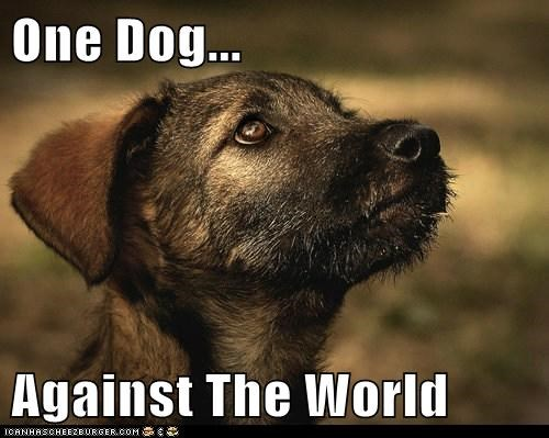One Dog...  Against The World