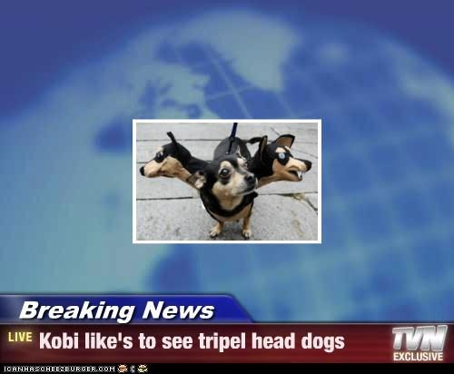 Breaking News - Kobi like's to see tripel head dogs