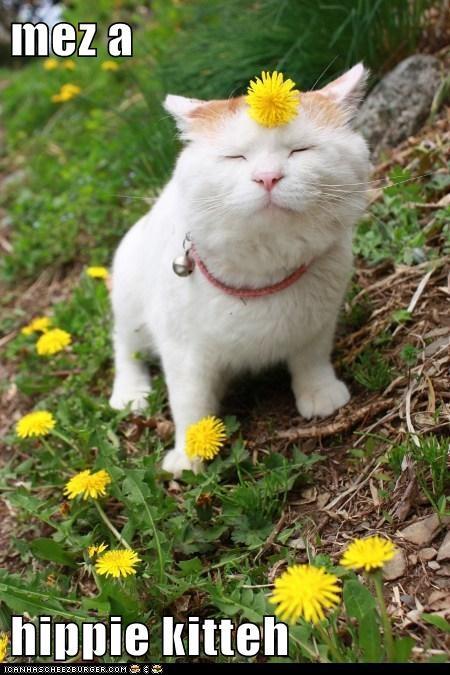mez a  hippie kitteh