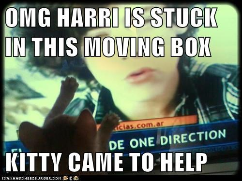 OMG HARRI IS STUCK