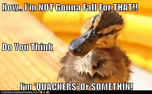 Now.. I'm NOT Gonna Fall For THAT!! Do You Think I'm 'QUACKERS' Or SOMETHIN!
