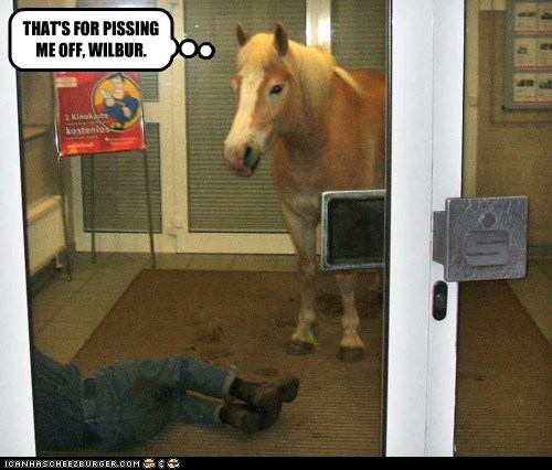 Talking Horse Pleads the Fifth